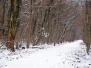 Forêt du Neuhof