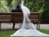mariage-basem-kasem-(78).jpg