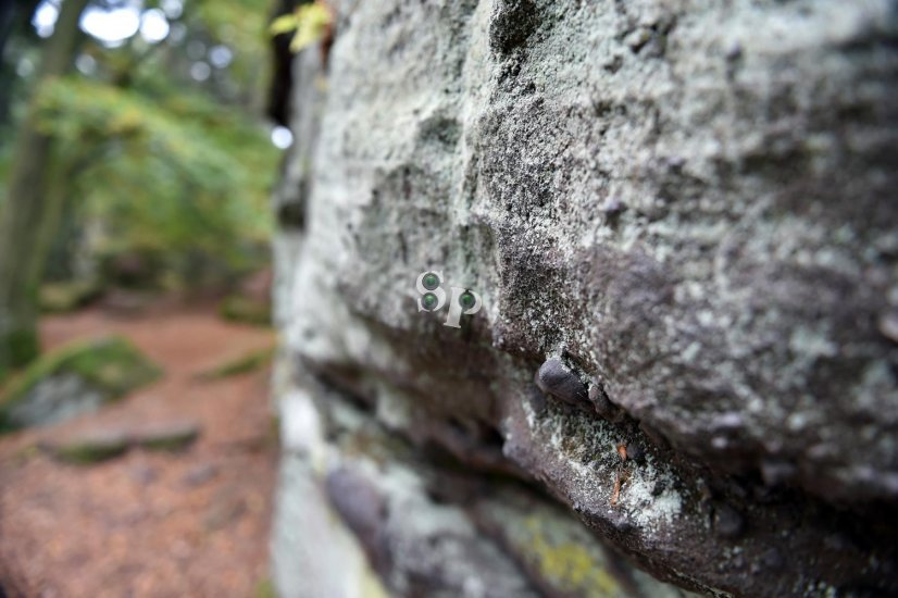 Mur Païen au Mont Sainte Odile en automne