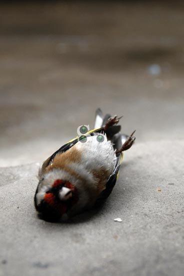 nature-morte(12)