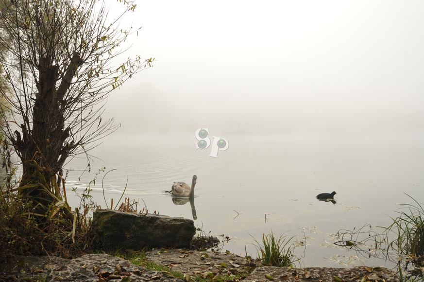 brouillars
