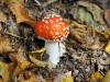 champignon-(19)