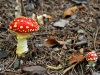 champignon-(25)