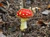 champignon-(26)