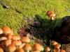 champignon-(40)