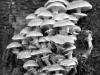 champignon-(43)