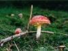 champignons-(05)