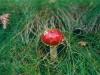 champignons-(06)