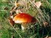 champignons-(08)