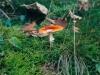 champignons-(09)