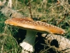 champignons-(1)