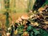 champignons-(12)