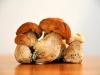 champignons-(14)