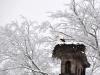 cigogne-hiver