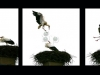 triptique-cigognes