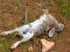 nature-morte(9)