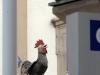 poule-et-coq(3)